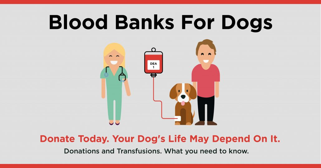 pet blood bank preston