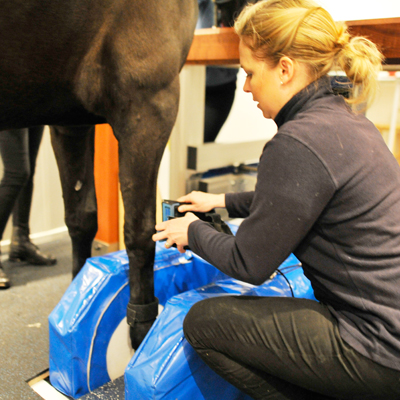 Oakhill equine MRI referral service