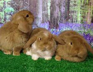 Rabbit vaccination Preston vets
