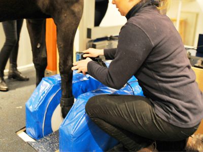 Equine MRI - Diagnostics