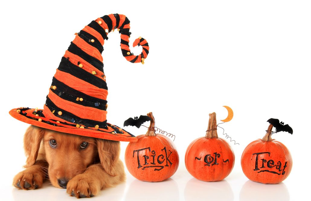 HALLOWEEN AND DOGS