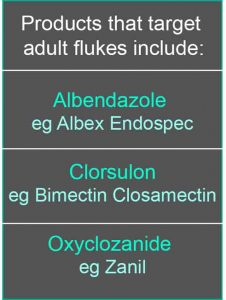 adult flukes treatment