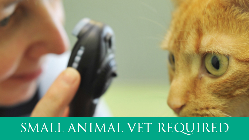 Small Animal Vet required
