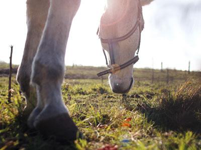 equine worm control plan