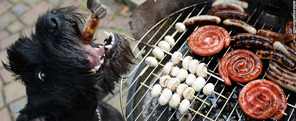 BBQ Dangers for pets