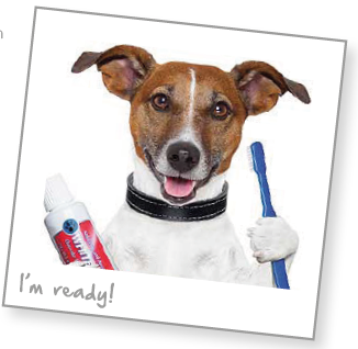 Dog tooth brushing