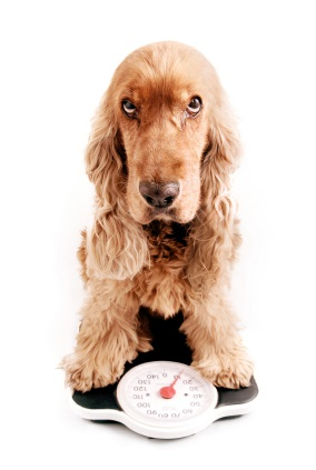 Pet Weight Management Clinic