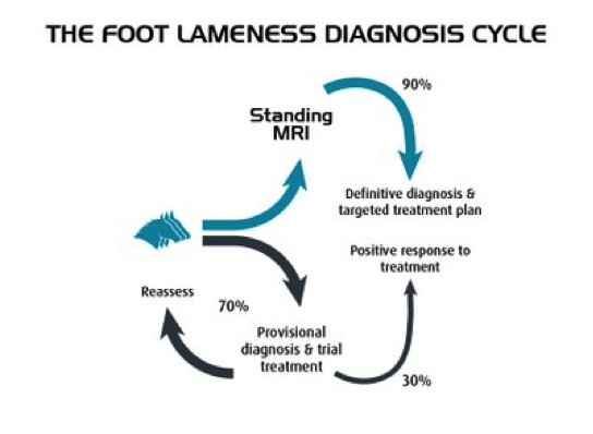 Foot Lameness Cycle