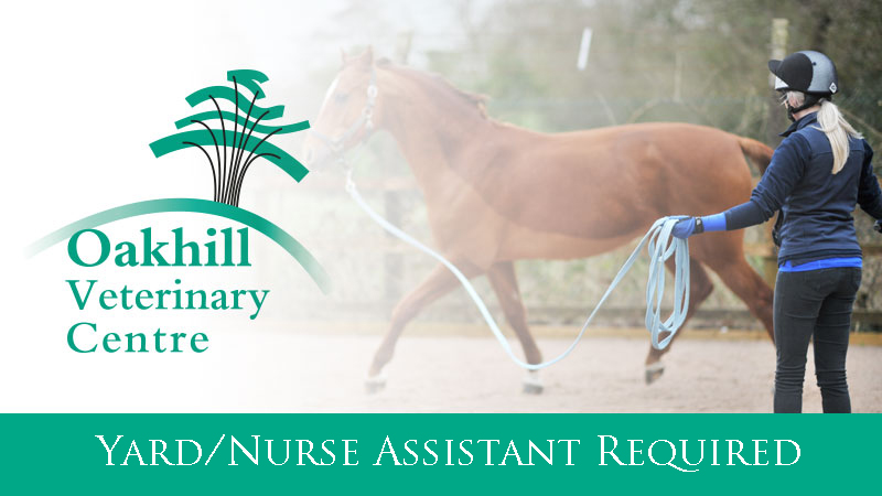 Equine Yard / Nursing Assistant required